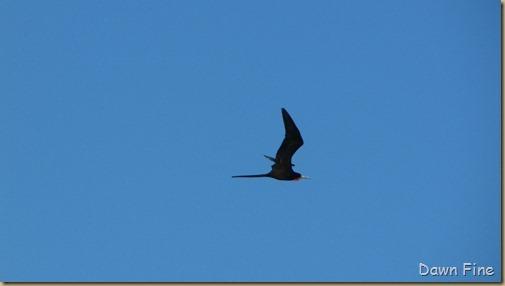 Pelican island nwr_185_thumb