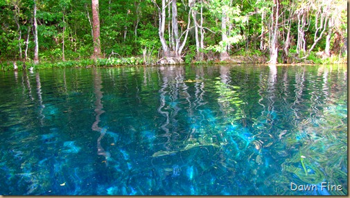Silver Springs State Park_113