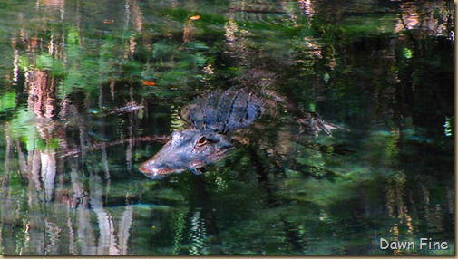 Juniper Springs,Ocala National Forest,Florida