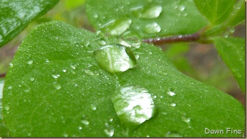 Water droplets and flowers_064
