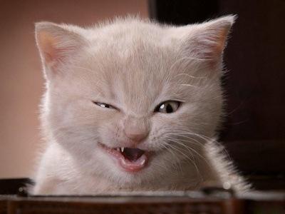 Gato como jurado