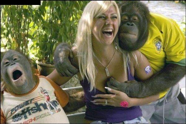 Przyjazne małpki