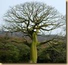 dry  tree (1)