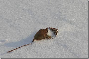 blatt-schnee