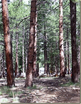 01 Looking through the Pines to the RV NR GRCA NP AZ (797x1024)