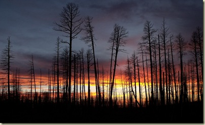 14 Sunset through 2006 Warm fire trees Hwy 67 S Kaibab NF AZ (1024x624)