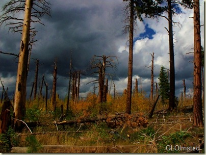 03 Storm over 2000 Outlet burn & fall aspen Point Imperial trail Walhalla Plateau NR GRCA NP AZ (1024x768)