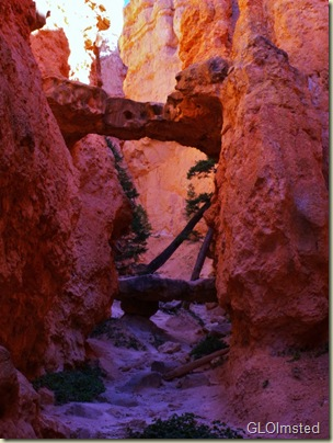 08 Two Bridges just off Navajo Loop trail Bryce Canyon NP UT (768x1024)