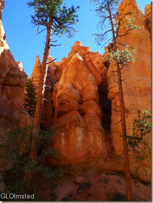 09 Hoodoos & grotto along Navajo Loop trail Bryce Canyon NP UT (768x1024)