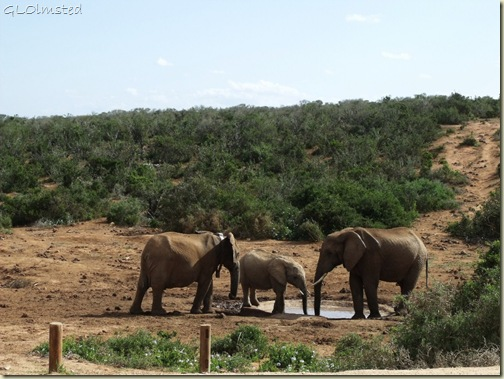 07 Elephants Addo Elephant NP Eastern Cape ZA (1024x768)