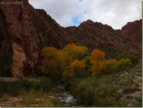 a531 Fall colors along Bright Angel Creek GRCA NP AZ (1024x768)