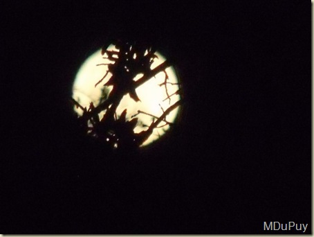 02 Full moon thru foliage Yarnell AZ by Mike (1024x768)