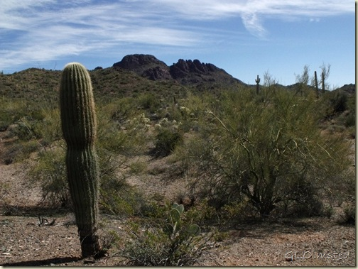 02 Saguaro BLM desert off Vulture Mine Rd Wickenburg AZ (1024x768)