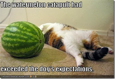 funny-pictures-cat-was-hit-with-a-watermelon