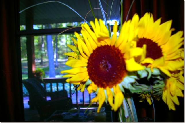 large head sunflowers looking onto the porch