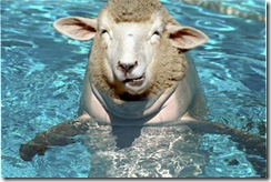 I looked for a picture of 'something random' and here's what popped up. A sheep-dolphin. Not creepy at all.
