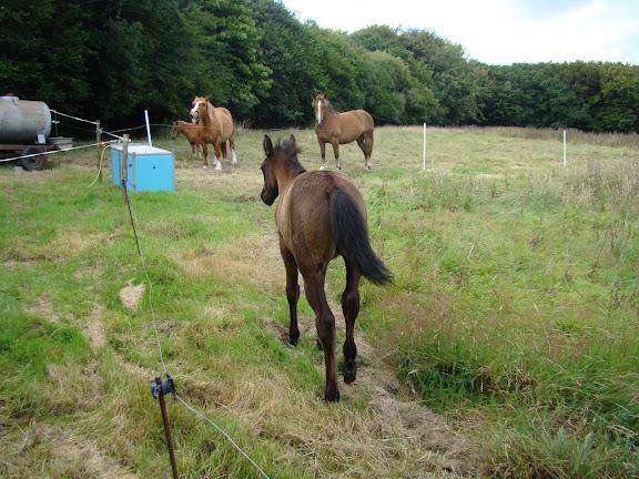 Vos plus belles grimaces de cheval et photos gag .... - Page 5 DSC08133