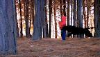 Perro Al Revés | Perro en el Bosque