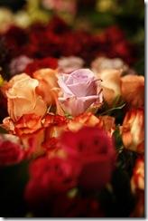 roses[1]