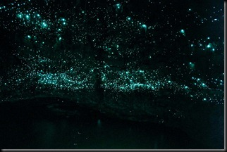 Spellbound_Glowworms_at_end_of_cave