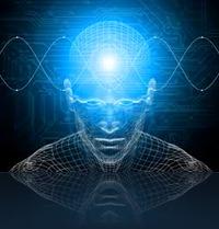La Mentalidad de un Emprendedor Digital Y La Metáfora de la Libertad del Oso
