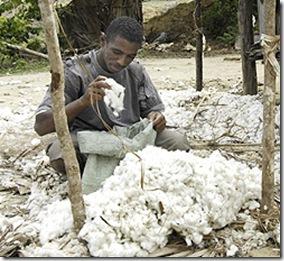 Produtor de Algodão (África)
