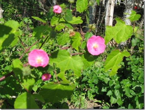 flowers 11-09 026