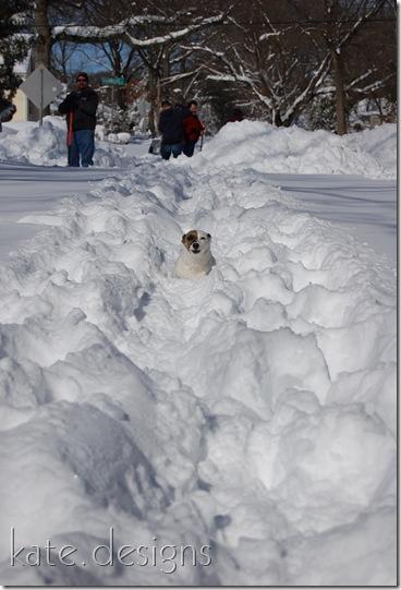 snow feb 7, 2010 005