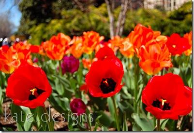 DC - Cherry Blossom Festival & Smithsonian 144