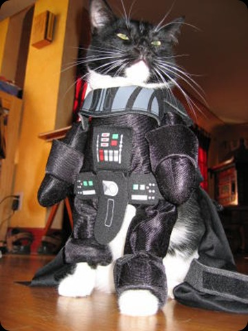 cool star wars photos Darth Cat