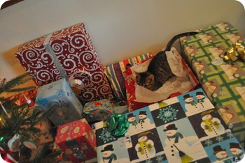 Cats in presents