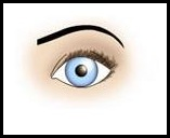 ojos redondos