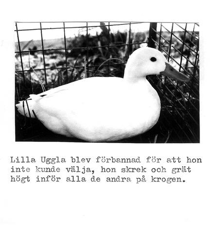 lillauggla-13