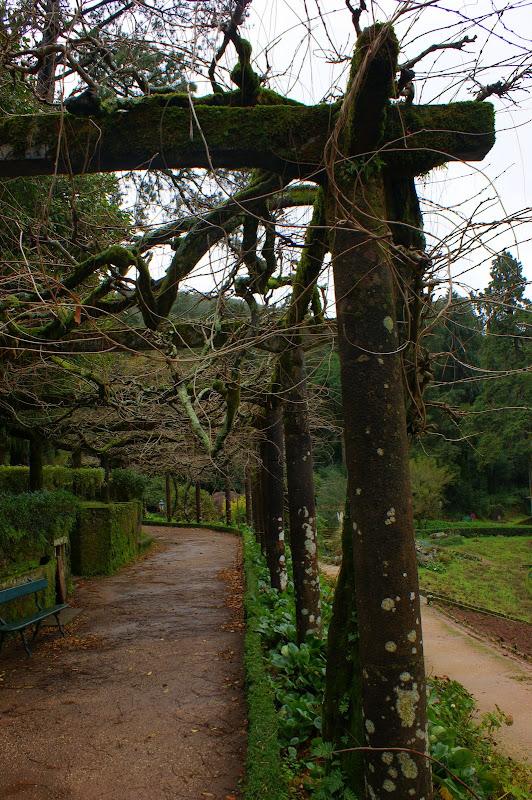 Jardim do palácio do Buçaco no inverno