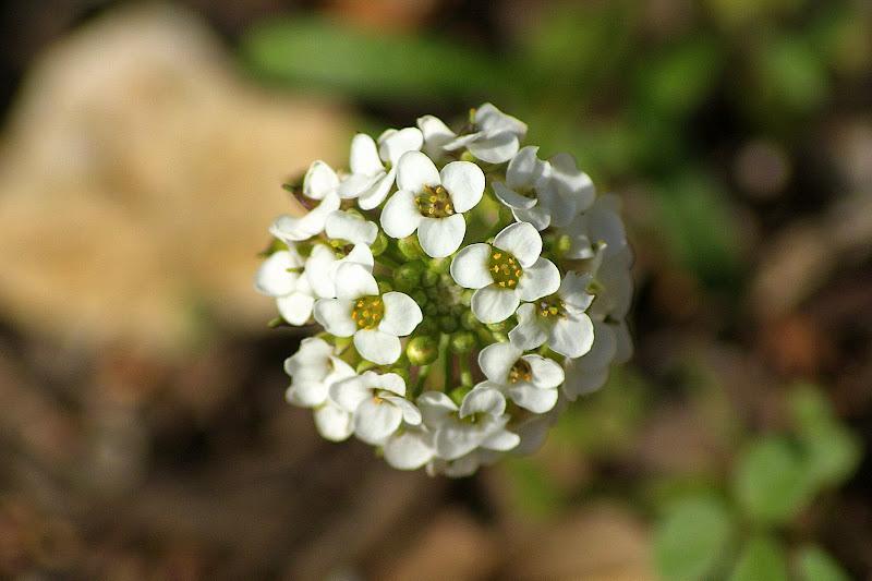 Flores na arrábida
