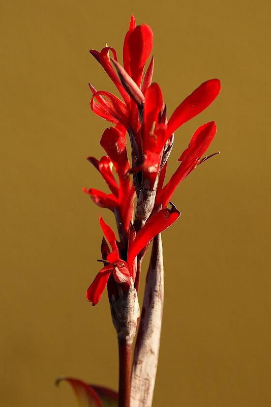 Com a luz do fim da tarde, flores em Cabo Verde