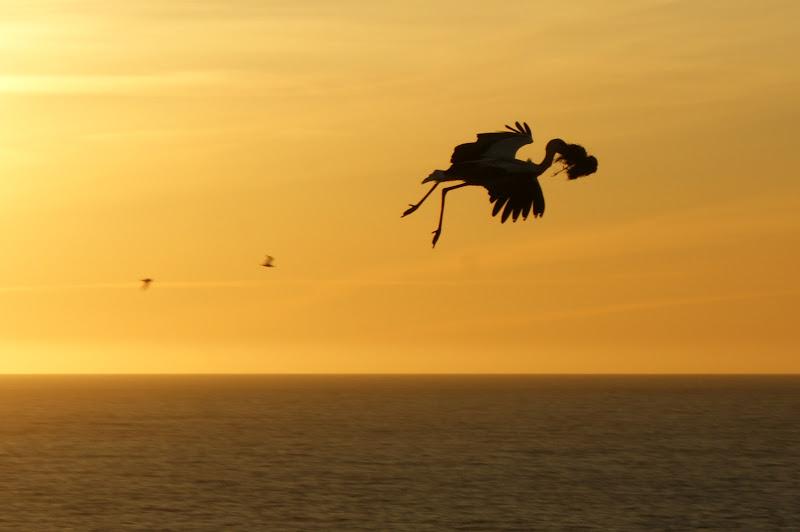 pôr do Sol no Cabo Sardão, Cegonha