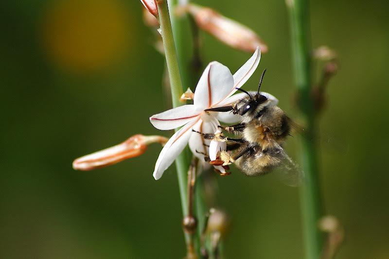 Detalhes da primavera, abelha na flor