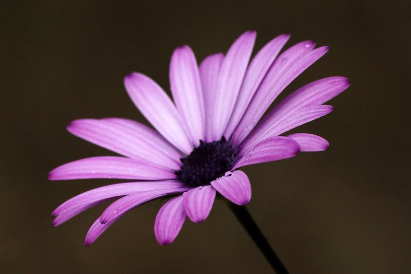 Perspectiva lilás