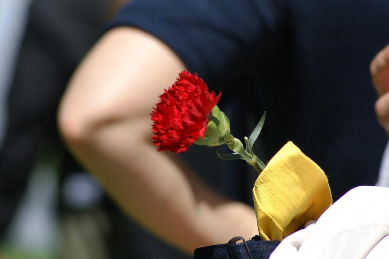 25 de Abril no Jardim de Vanicelos, cravo vermelho