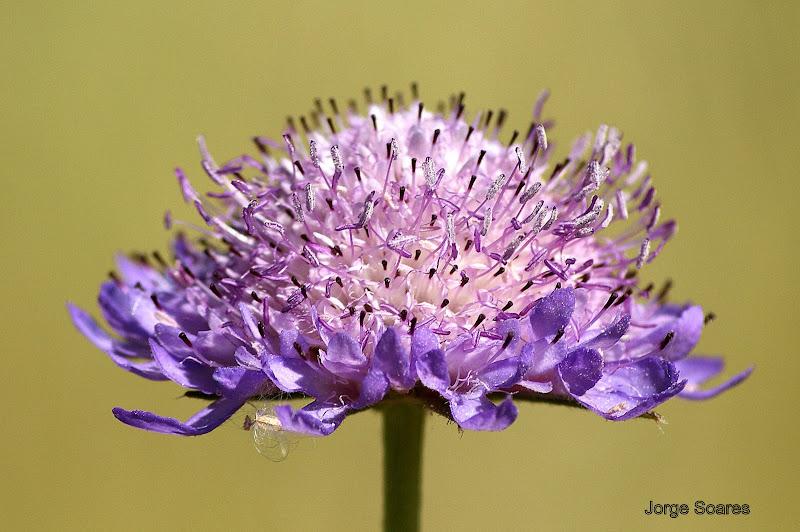 Detalhes de uma flor silvestre