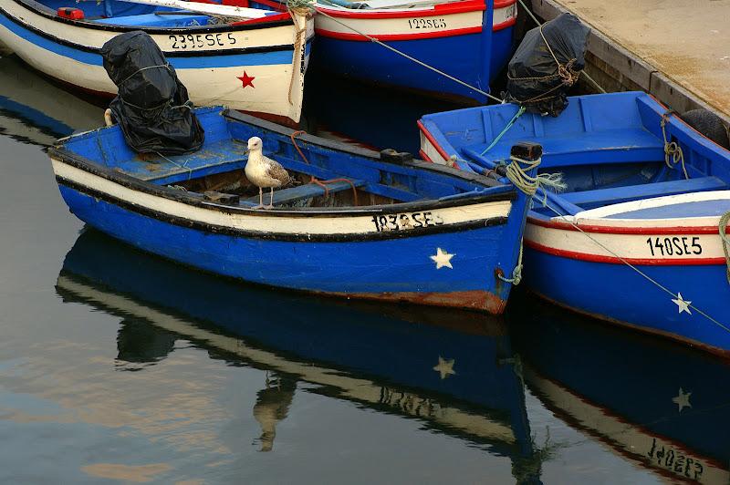 A gaivota e o barquinho azul