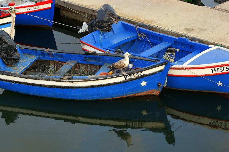 A gaivota e o barco azul do Rio Sado