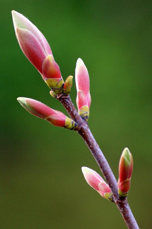 O despontar da Primavera, Carrigaline, Cork, Eire