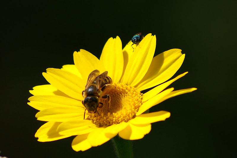 A abelha, a flor amarela e o bichinho
