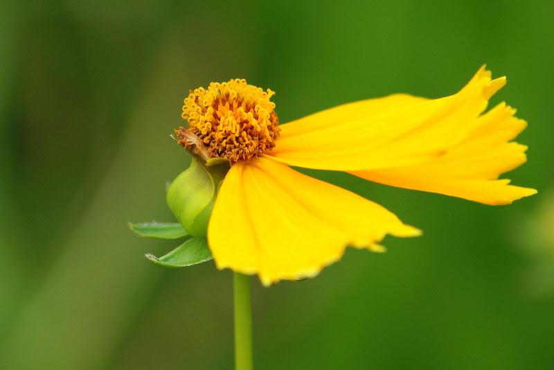 Flores de Julho