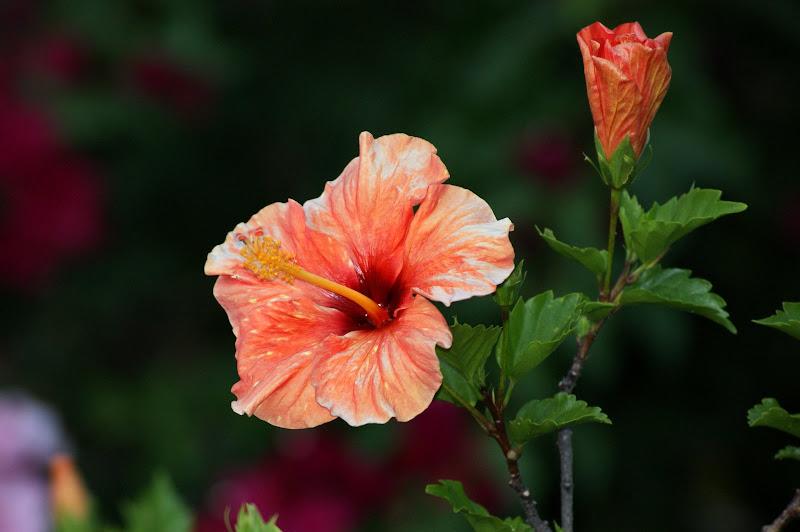 Flores ao fim de tarde