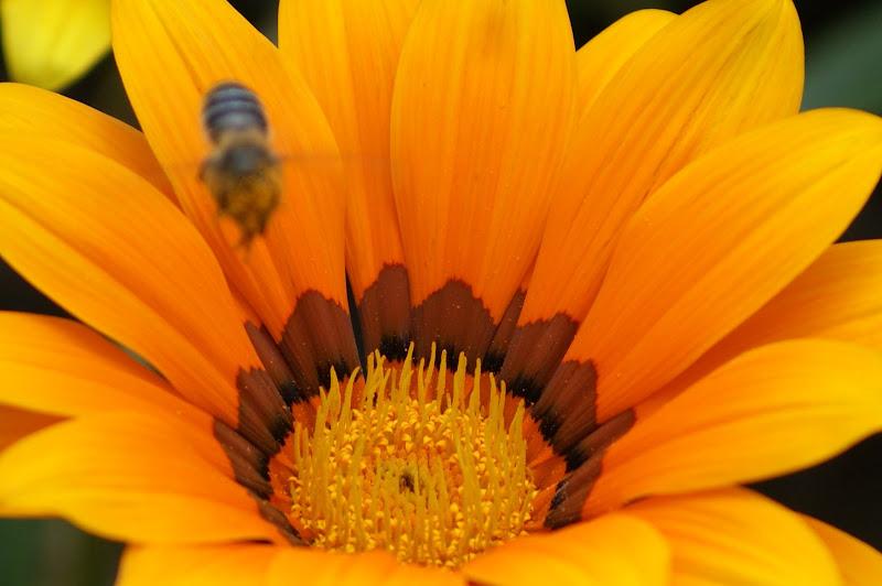 Flores com cores, amarelo vivo
