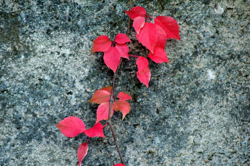 O outono