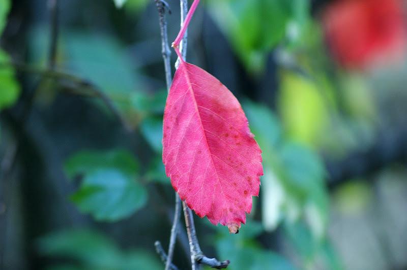 Outono, folha vermelha